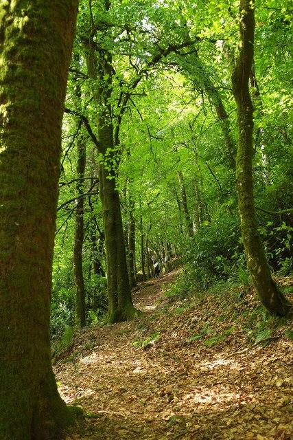Path, Gidleigh Park