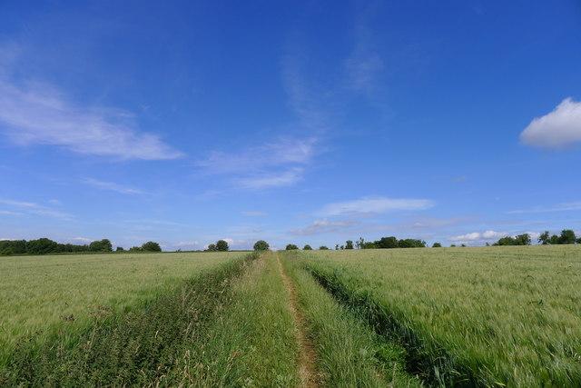 Path through barley
