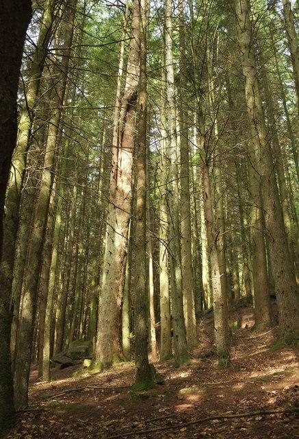 Woodland, Gidleigh Park