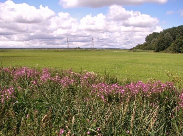 Fields and pastures west of Waveney Forest