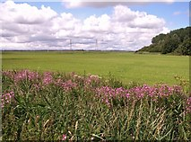 TM4599 : Fields and pastures west of Waveney Forest by Evelyn Simak