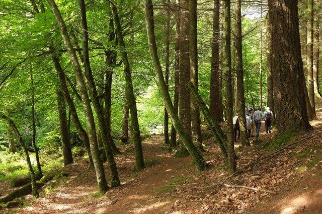 Paths, Gidleigh Park