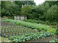 SK4140 : Allotment and concrete hut by Alan Murray-Rust