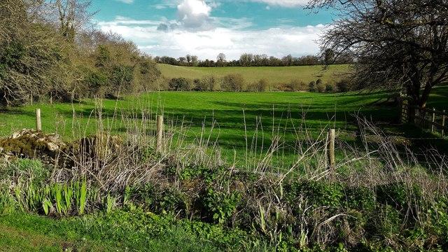 Meadow at Radford