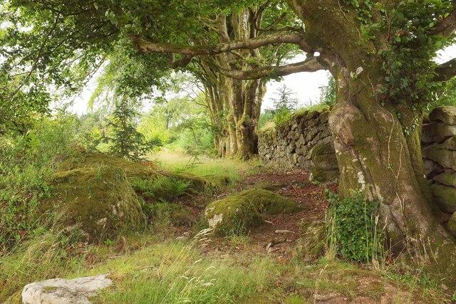 Wall, Higher Plantation, Gidleigh