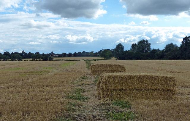 Path across farmland to Oadby