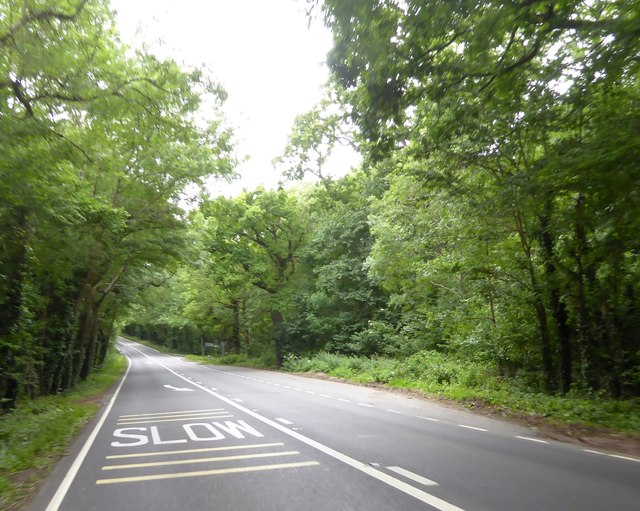 A39 in Loxley Wood