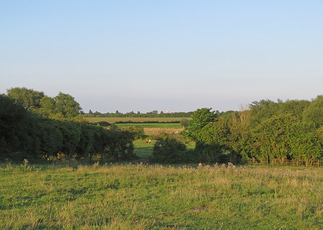 A July evening on Grantchester Meadows