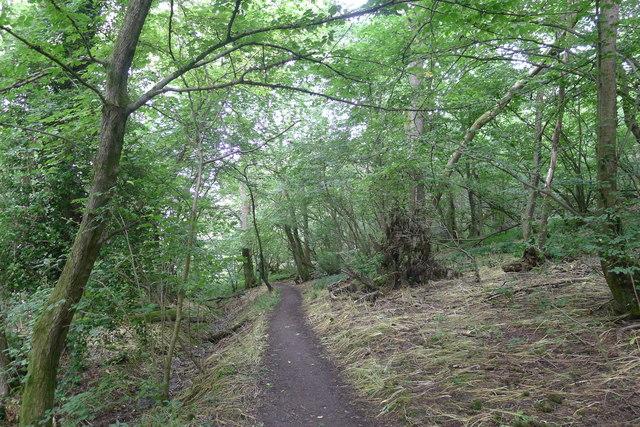 Dyrham Wood
