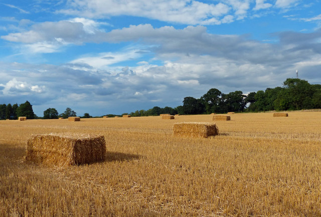 Farmland and bales on the eastern edge of Oadby