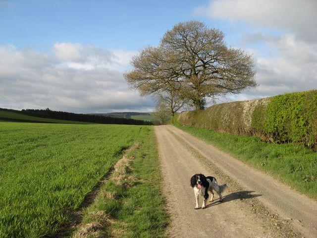 Footpath to Great Hagley