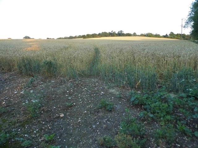Field in Redbournbury