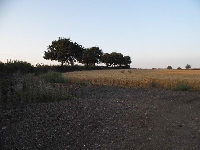 Field by Beesonend Lane