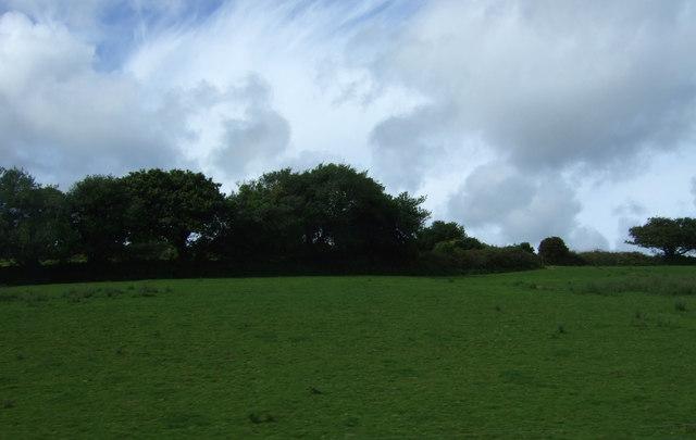 Grazing near Mount Prickle