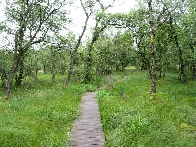 Birch woodland, Malham Tarn