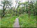 SD8867 : Birch woodland, Malham Tarn by Gordon Hatton