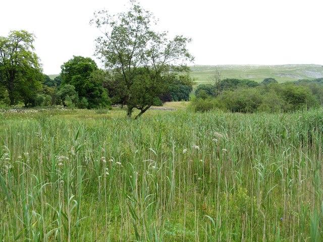 Fringe of the bogland at Malham Tarn Estate