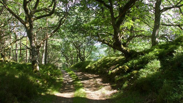 Track through woodland near Loch Achility
