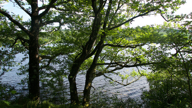 Loch Achilty behind its wooded shoreline