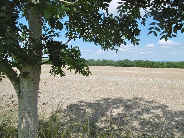 Coulston, stubble field