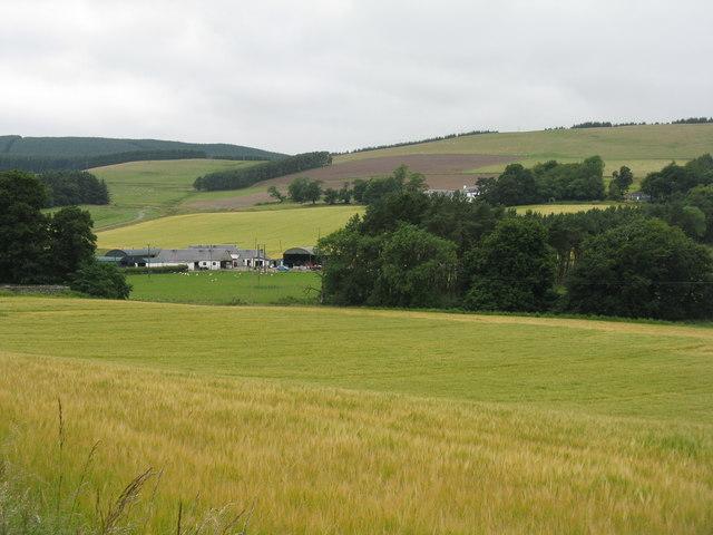 Cardon at Glenholm