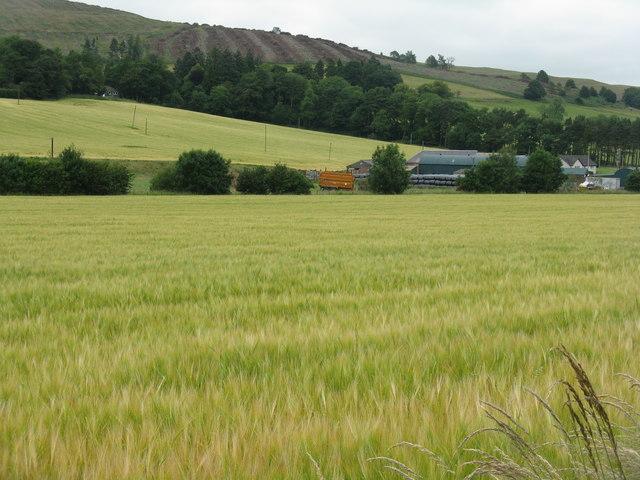 Barley at Glenholm