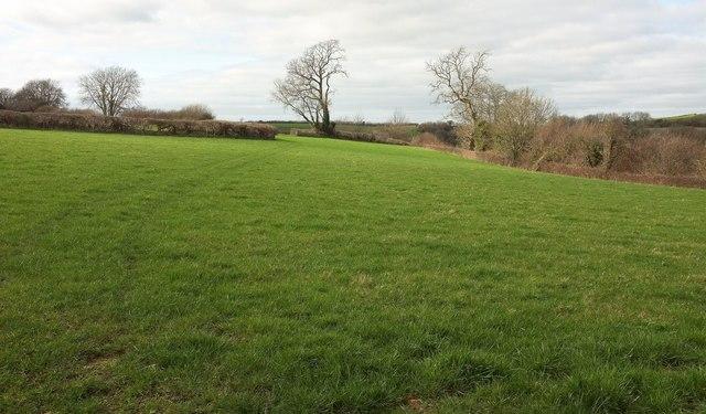 Field by Ruscombe Lane