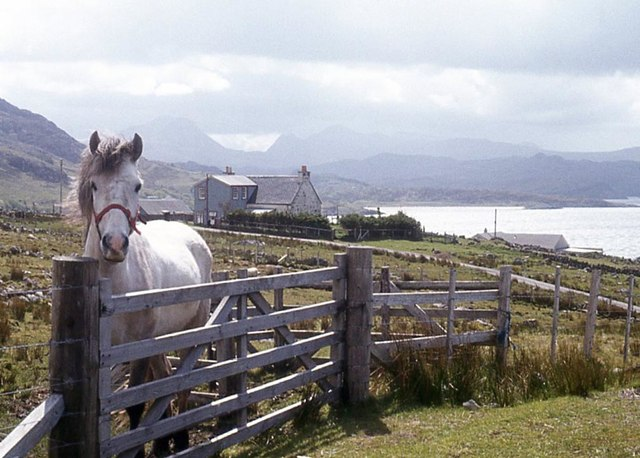 Horse at Mial, Gairloch