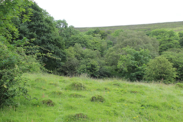 Hillside meadow, Silent Valley Local Nature Reserve