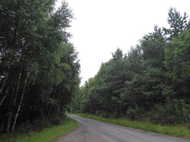 Minor road through Limekilns Wood
