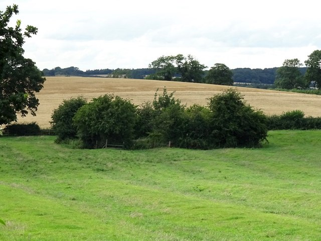 Pond in a ridge and furrow field