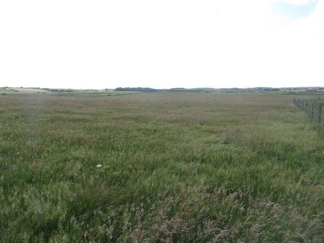 Coastal grassland at Breil Nook