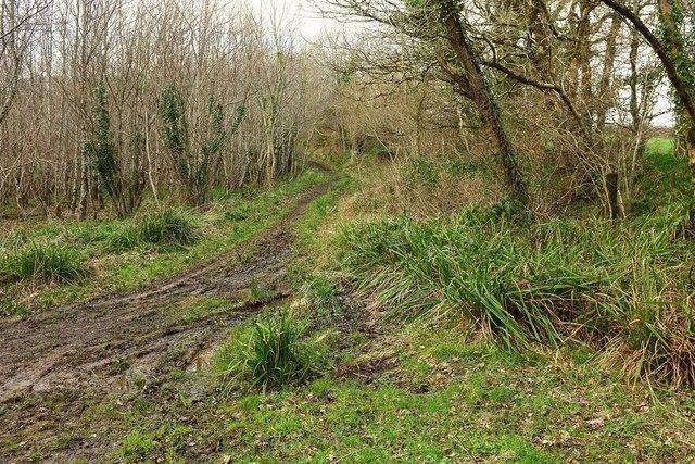 Track, Hooke Park
