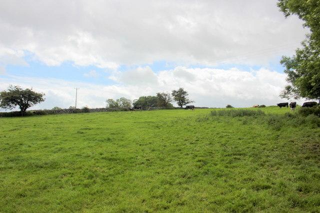 Pasture Fields Near Monyash