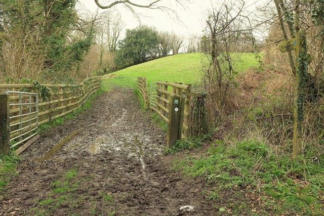 Bridleway west of Hooke