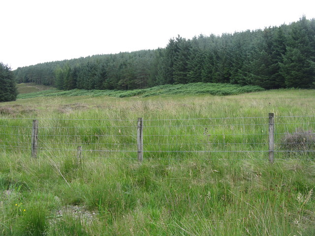 Forestry in Glen Holm