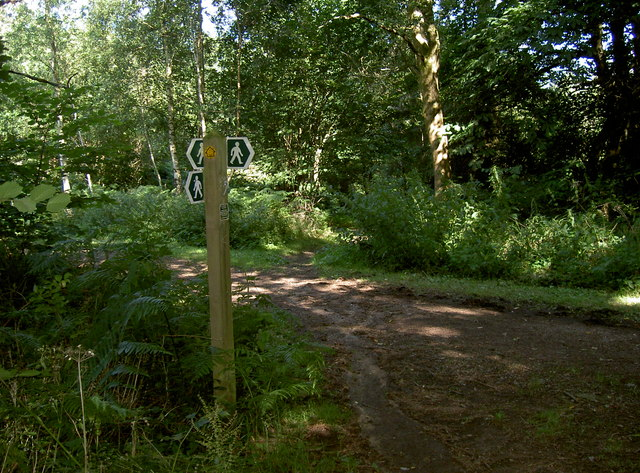 Four ways in Lord's Wood