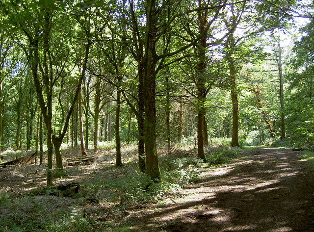 In Lord's Wood