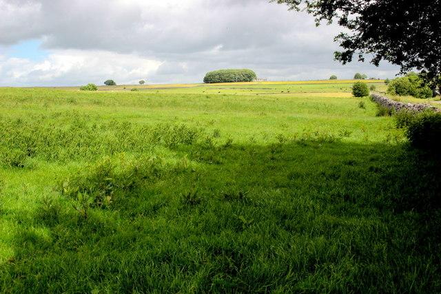 Field at Johnson Lane