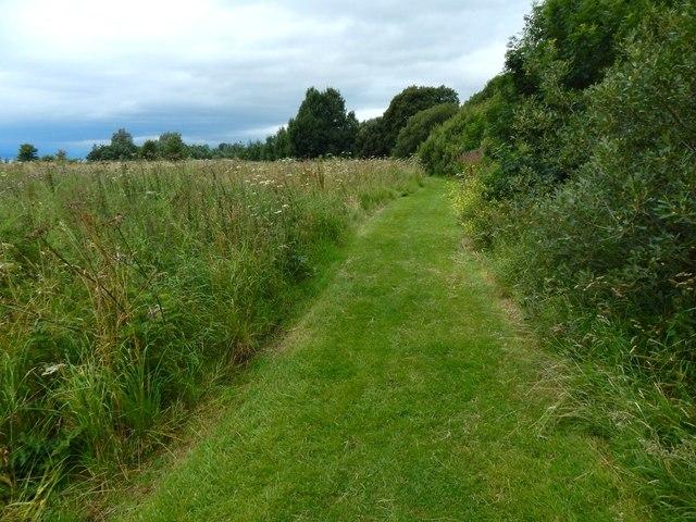 Path in Havoc Grassland