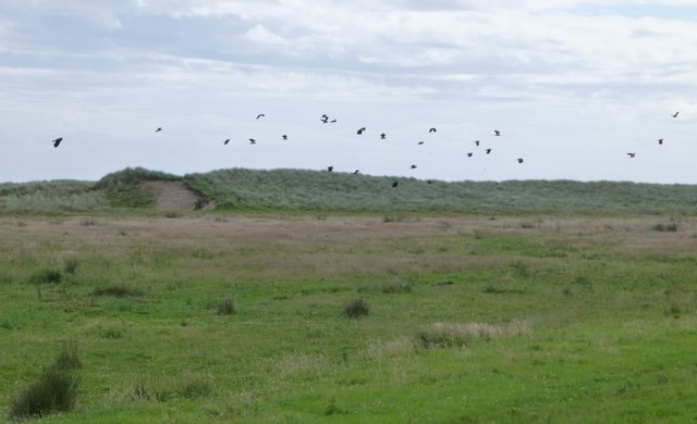 Lapwings over the dunes
