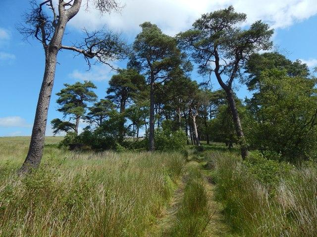 A path through Black Wood