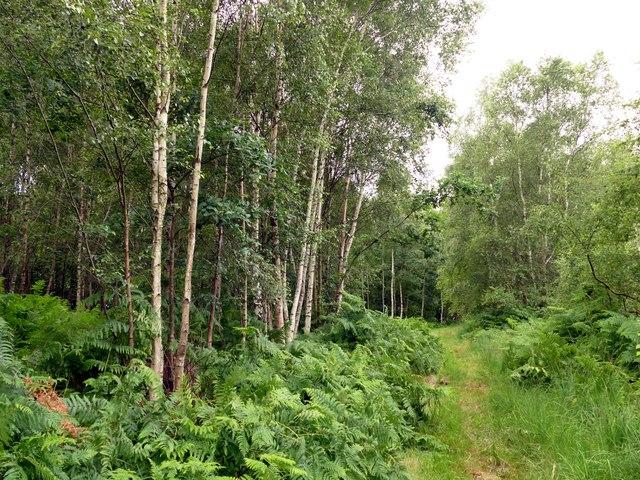 Path through woodland on Thorne Waste