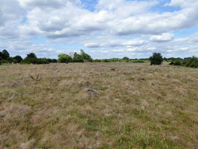 Grassland with anthills, Staines Moor
