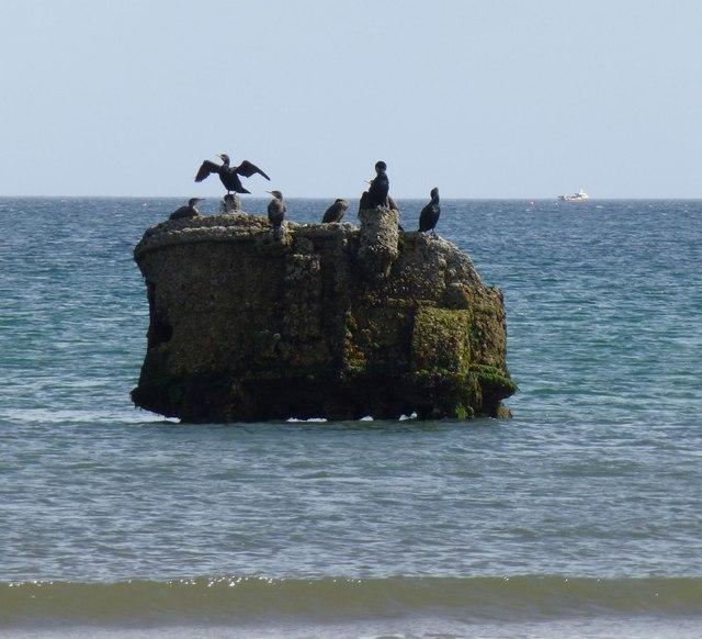 Cormorants on wreckage