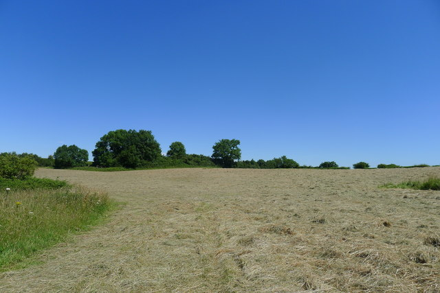 Field with drying hay