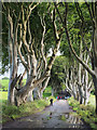 D0333 : The 'Dark Hedges' near Armoy by Rossographer