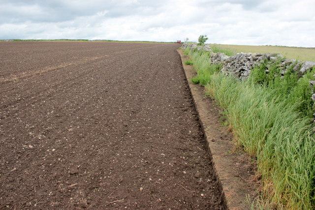 Field Margin Near Sheldon