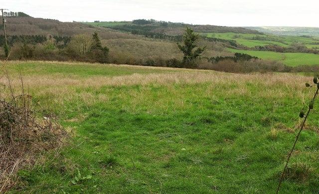 Field by Coltleigh Farm