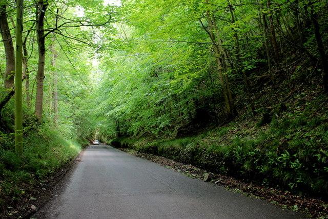 Road Through Arrock Plantation